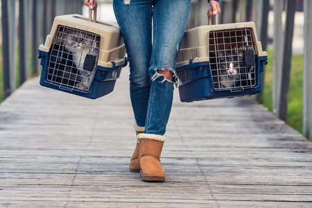 Moving with pets, transferring cats in a portable cat carrier. Traveling with pets