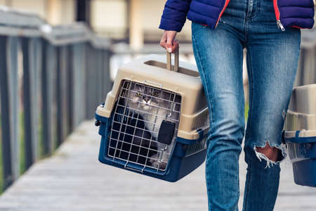 Woman carrying her cats in a special plastic cage or pet travel carrier. Moving a cat to a new house
