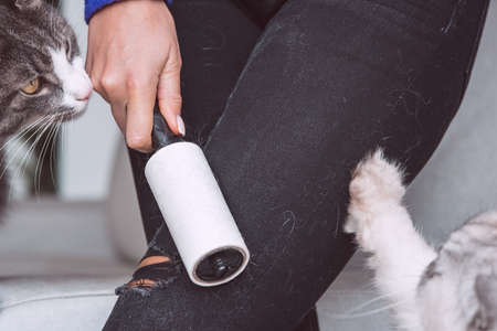 Woman cleaning clothes with clothes roller, lint roller or sticky roller from cats hair. Cats hair on clothes. Cleaning hair from pets