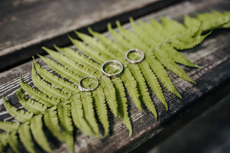 Two wedding rings and an engagement ring lie on a fern plant on a wooden table