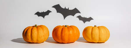 Fresh ripe orange pumpkin on white background. Space with bats Halloween concept