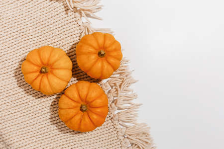 Fresh ripe orange pumpkins on white background. Space for text mockup Halloween concept
