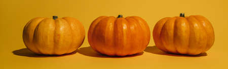 Fresh ripe pumpkin on orange background. Space for text mockup Halloween concept