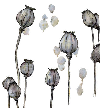 Watercolor illustration of poppy heads in pastel shades isolated on a white background. Stockfoto