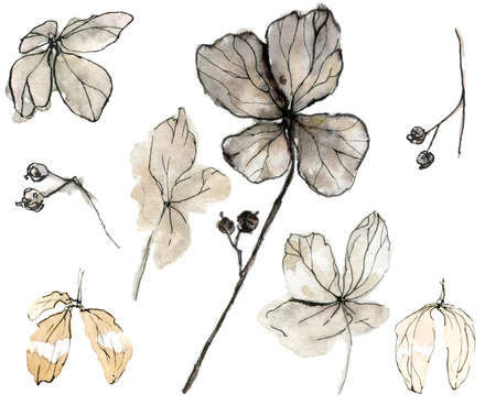 Watercolor illustration of delicate pastel, beige leaves, branches in the sketch style. Elegant dried flowers on a white background. Hydrangea petals for the design of cards, invitations, covers and fabrics.