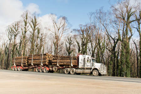 Australian bushfires aftermath: a truck with burned pines logs which was badly damaged by severe bushfires and nedd to cut down. 版權商用圖片