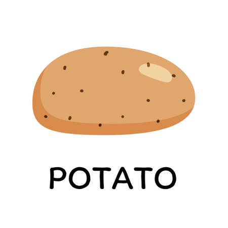 Potato, vector illustration in cartoon flat stye. Food and vegetable concept. Print for recipes, restaurant, supermarket, market place. Vegetarian fresh food product for sticker, grocery shop