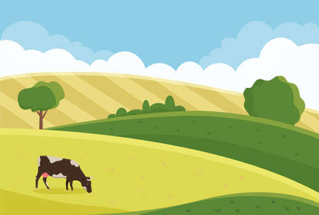 a cow grazes in a summer meadow