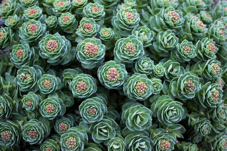 accents: Top view of green succulent plant pattern with pink accents