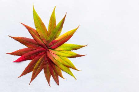 Hojas De Color Gradiente Dispuestos En Un Semicírculo. Coloración De ...