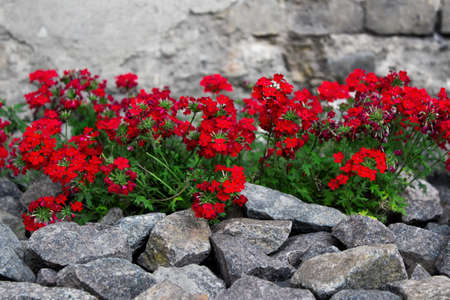 ides: Element of landscape design - red flowers surronded with stones.