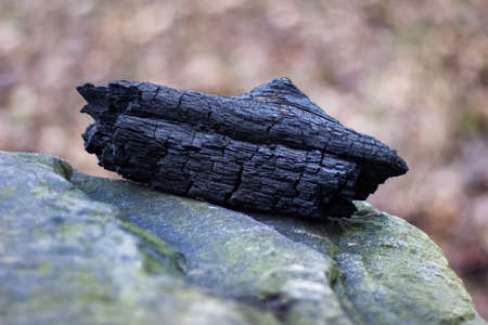 Charred timber left after bonfire in the forest. Natural wood charcoal with cracks photographed lying on the stone. Stock Photo
