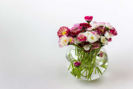 Little glass vase with spring garden pink white daisies on white background. Photo with copy blank space. Stock Photo