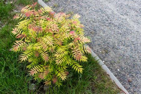Gardening elements beautiful bush growing next to pavement road. Standard-Bild - 122939537