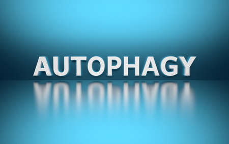 Word Autophagy written in white bold letters standing on blue shiny reflective surface. 3d illustration.