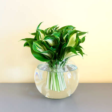 Spherical ball glass vase with green bouquet of garden Hosta plant leaves standing on gray table.