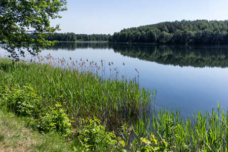 Idyllic pond lake recreational landscape with forest on the horizon, clear water and clear skies on a sunny day.