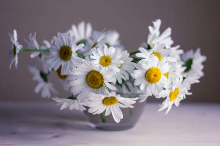 Close up of bouquet of white wild daisies in small glass vase. Photo tinted with pink color.