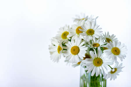 Close up of bouquet of white wild daisies in small glass vase. Photo with copy blank space on the left side. Banco de Imagens