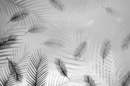 Abstract gentle romantic pattern with feathers in black and white colors. 3d illustration.