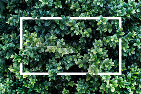 Trendy pattern of lavish foliage leaves with rectangle geometric square shapes in bushes.
