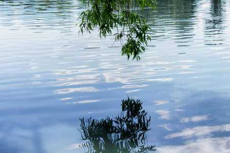 Surface of pond water with rippes and hanging ivy leaves.