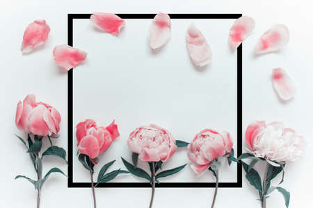 Red colored peony flowers, petals and large square black border frame with copy blank space on white background. Banco de Imagens