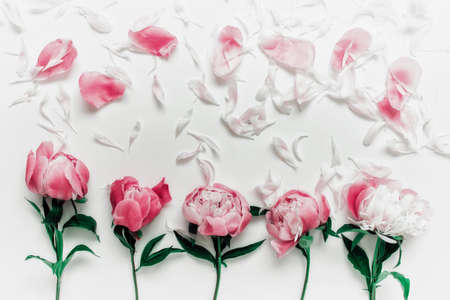 Five romantic delicate peony flowers with red separate petals on white background.