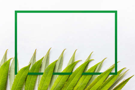 Green forest plant leaves with green border frame on white background. Photo with copy blank space for text.