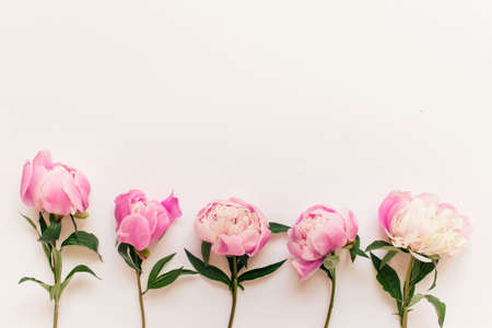 Five pink peony flowers with short stems and green leaves on white background. Photo with copy blank space. Banco de Imagens