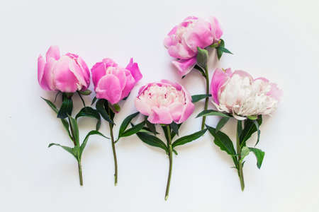 Five messy pink peony flowers with short stems and green leaves on white background.