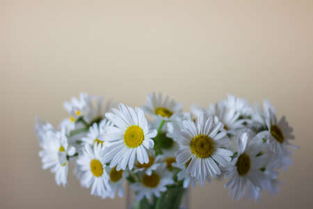 Bouquet of wild white daisies in a vase. Photo with copy blank space. Reklamní fotografie