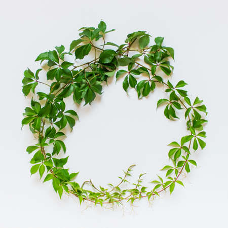 Wine plant branch arrange in a wreath on white background.