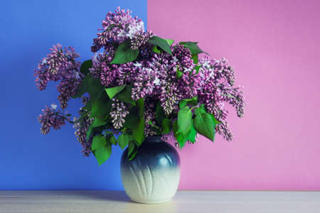 Bouquet of pink lilac flowers in a vase standing on the table on the double colored pink and blue background.