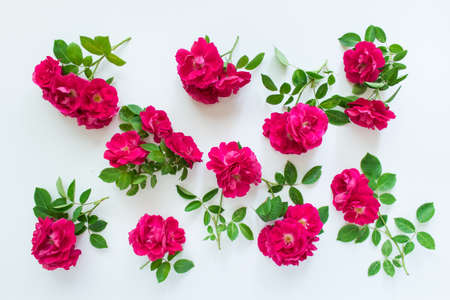 Randomly arranged branches of wild red tea roses on white background.