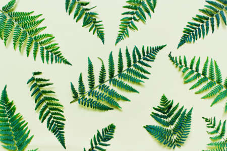 Flat lay with branches of forest ferns on yellow background.