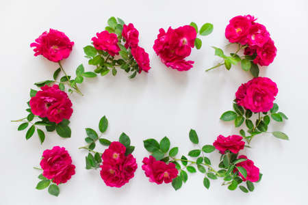 Wild red tea roses arranged in circle on white background. Photo with copy blank space. Reklamní fotografie