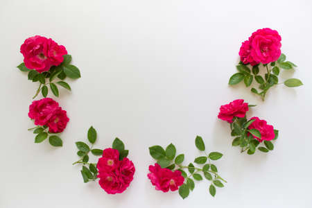Six branches of wild red tea roses arranged in half circle on white background. Photo with copy blank space. Reklamní fotografie