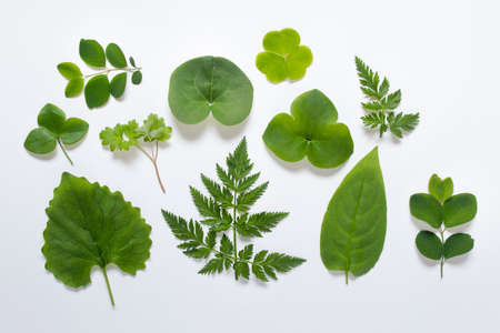Set of unique different shapes of wild plants on white background.