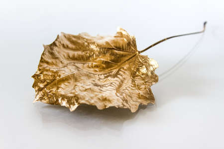 Close Up of single age old dry autumn leaf painted with golden metallic paint on white background.