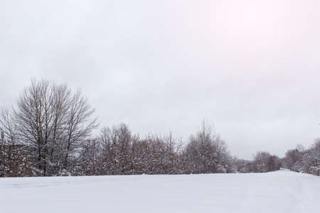 Winter landscape with trees and snow covered ground.