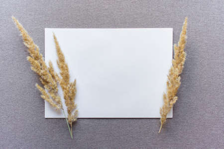 A4 paper mockup template with two fluffy field plant branches on beige textured fabric cloth. Photo with copy blank space.