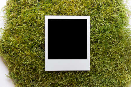 One single polaroid photo with copy blank space on green moss background.