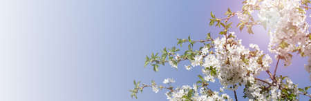Wide banner with summer flowers on the background of blue sky. Photo with copy blank space.