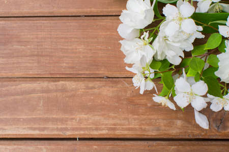 White flowers on a wooden brown background. Template with place for text. Frame of flowers.