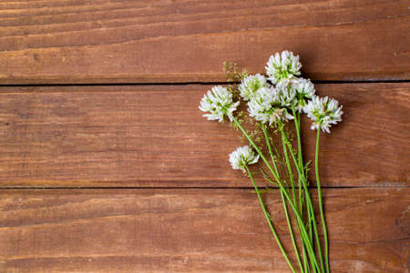 Wildflowers on a wooden background. Bouquet of clover. Place for text. Zdjęcie Seryjne