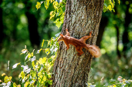 A small red squirrel stood on the tree, clinging to the trunk of the tree.