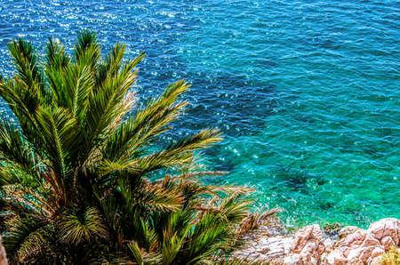The top of a palm tree against a background of turquoise waters on the shore of the Aegean Sea.