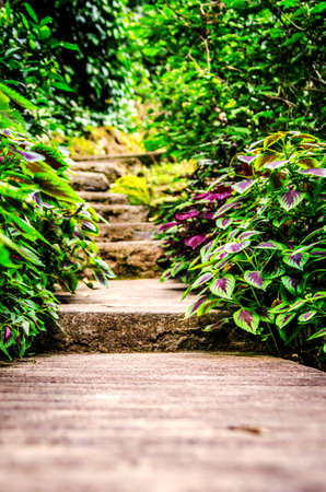 Stone steps running through thickets.
