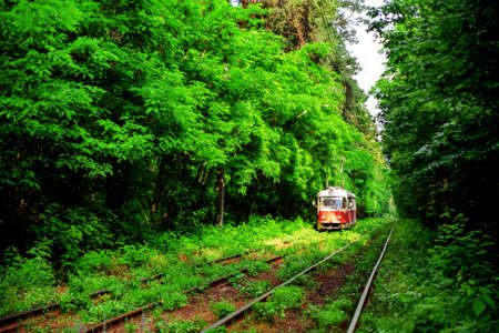 A red tram riding in the green forest in the rays of the summer sun.